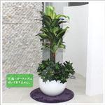 人工観葉植物 ディフェンバキア 110cm