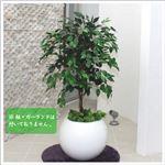 人工観葉植物 ベンジャミン グリーンナターシャ 110cm
