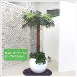 人工観葉植物 ヤシ 140cm/18LVS