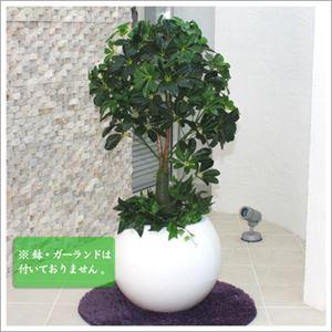人工観葉植物 カポック ヤドリフカノキ 105cm