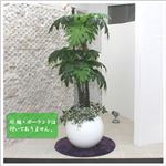 人工観葉植物 フィロデンドロン・セローム 150cm