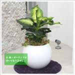 人工観葉植物 ディフェンバキア 73cm