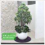 人工観葉植物 カポック ヤドリフカノキ 130cm