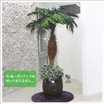 人工観葉植物 パームヤシ 150cm(フェニックス)
