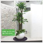 人工観葉植物 ドラセナフレグランス 150cm