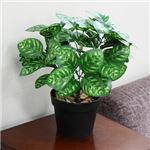 人工観葉植物 ピーコックウィンター 45cm