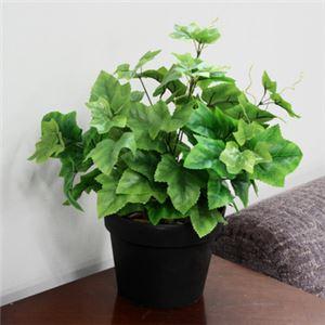 人工観葉植物 グレープリーブス 緑斑 45cm