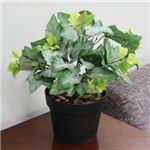 人工観葉植物 グレープリーブス 紅白斑 45cm