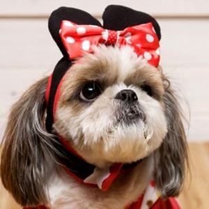 Its Dog(イッツドッグ) コスプレ帽子/リボンミニ【L】