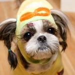 Its Dog(イッツドッグ) コスプレ帽子/ポロロ【S】