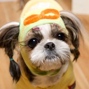 Its Dog(イッツドッグ) コスプレ帽子/ポロロ【L】
