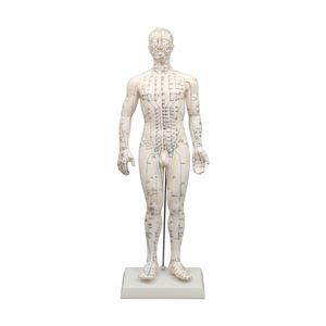 経穴模型 男性モデル50cm