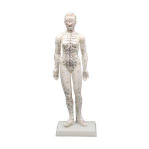 経穴模型 女性モデル48cm