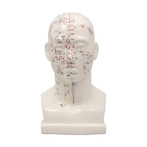 頭経穴模型