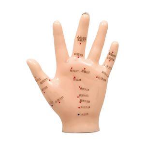 手経穴模型