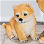 おしゃれ 犬型オブジェ/置物 【豆柴】 幅24×奥行15×高さ22cm 『本物そっくりアニマル』 〔ガーデン 入口 エントランス〕