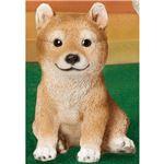 おしゃれ 犬型オブジェ/置物 【豆柴】 幅13×奥行15×高さ20cm 『NEW 本物そっくりアニマル』 〔ガーデン 入口 エントランス〕