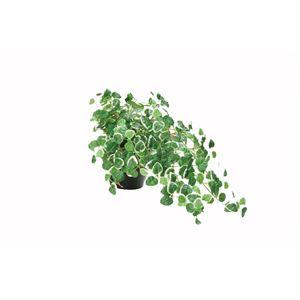 光の楽園【光触媒/人工観葉植物】ミムラ