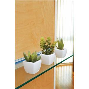 光の楽園【光触媒/人工観葉植物】多肉植物3点セット