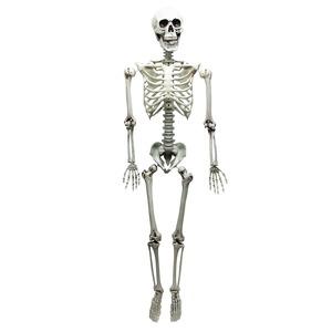 【コスプレ】 等身大骸骨