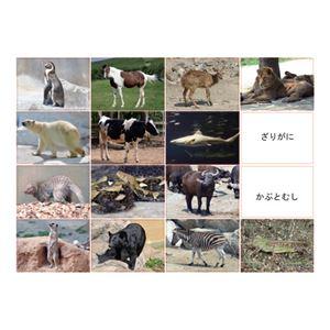 DLM 多目的言語カードセット動物編CD付KK0491