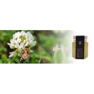 北海道山奥の蜂蜜クローバー 3個セット