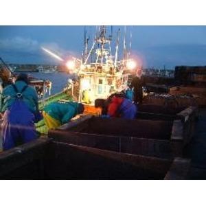 北海道産の魚卵3種食べやすくほぐしちゃいましたセット 各150g入